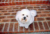 DOG 19 RK0114 02