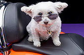 DOG 19 RK0147 01