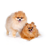 DOG 19 RS0017 02