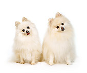 DOG 19 RS0019 01