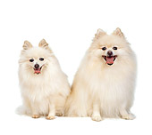DOG 19 RS0019 02