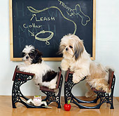 DOG 19 RS0032 01