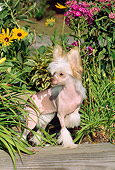 DOG 19 CE0003 01