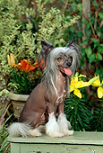 DOG 19 CE0004 01