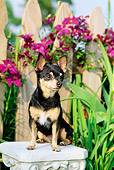 DOG 19 CE0011 01