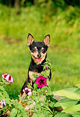 DOG 19 CE0012 01