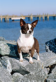 DOG 19 CE0014 01