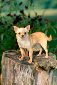 DOG 19 CE0015 01