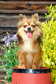 DOG 19 CE0017 01
