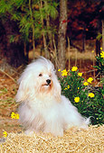 DOG 19 CE0022 01