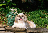 DOG 19 CE0024 01