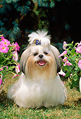 DOG 19 CE0025 01