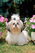 DOG 19 CE0026 01