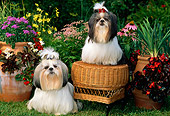 DOG 19 CE0027 01