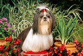 DOG 19 CE0029 01