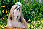 DOG 19 CE0030 01