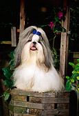 DOG 19 CE0035 01