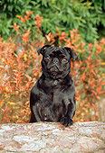 DOG 19 CE0038 01