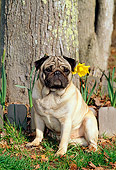 DOG 19 CE0042 01
