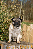 DOG 19 CE0043 01