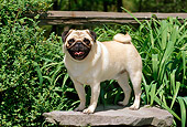 DOG 19 CE0046 01