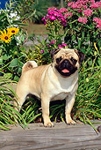 DOG 19 CE0047 01