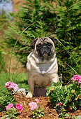 DOG 19 CE0049 01