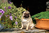 DOG 19 CE0050 01