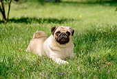 DOG 19 CE0051 01