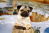 DOG 19 CE0053 01