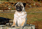 DOG 19 CE0054 01