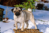 DOG 19 CE0056 01