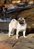 DOG 19 CE0057 01