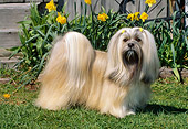 DOG 19 CE0059 01