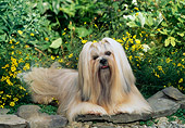 DOG 19 CE0061 01