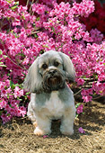 DOG 19 CE0063 01