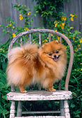 DOG 19 CE0065 01