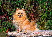 DOG 19 CE0066 01