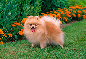 DOG 19 CE0067 01