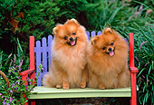 DOG 19 CE0068 01