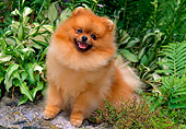 DOG 19 CE0069 01