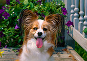 DOG 19 CE0071 01