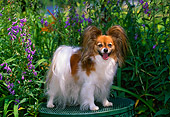 DOG 19 CE0073 01