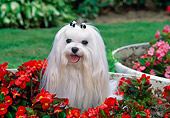 DOG 19 CE0075 01