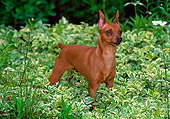 DOG 19 CE0077 01