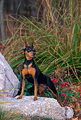 DOG 19 CE0079 01
