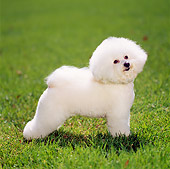DOG 19 DC0012 01