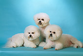 DOG 19 DC0020 01