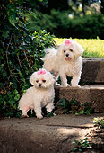DOG 19 DC0079 01