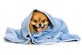 DOG 19 DC0094 01